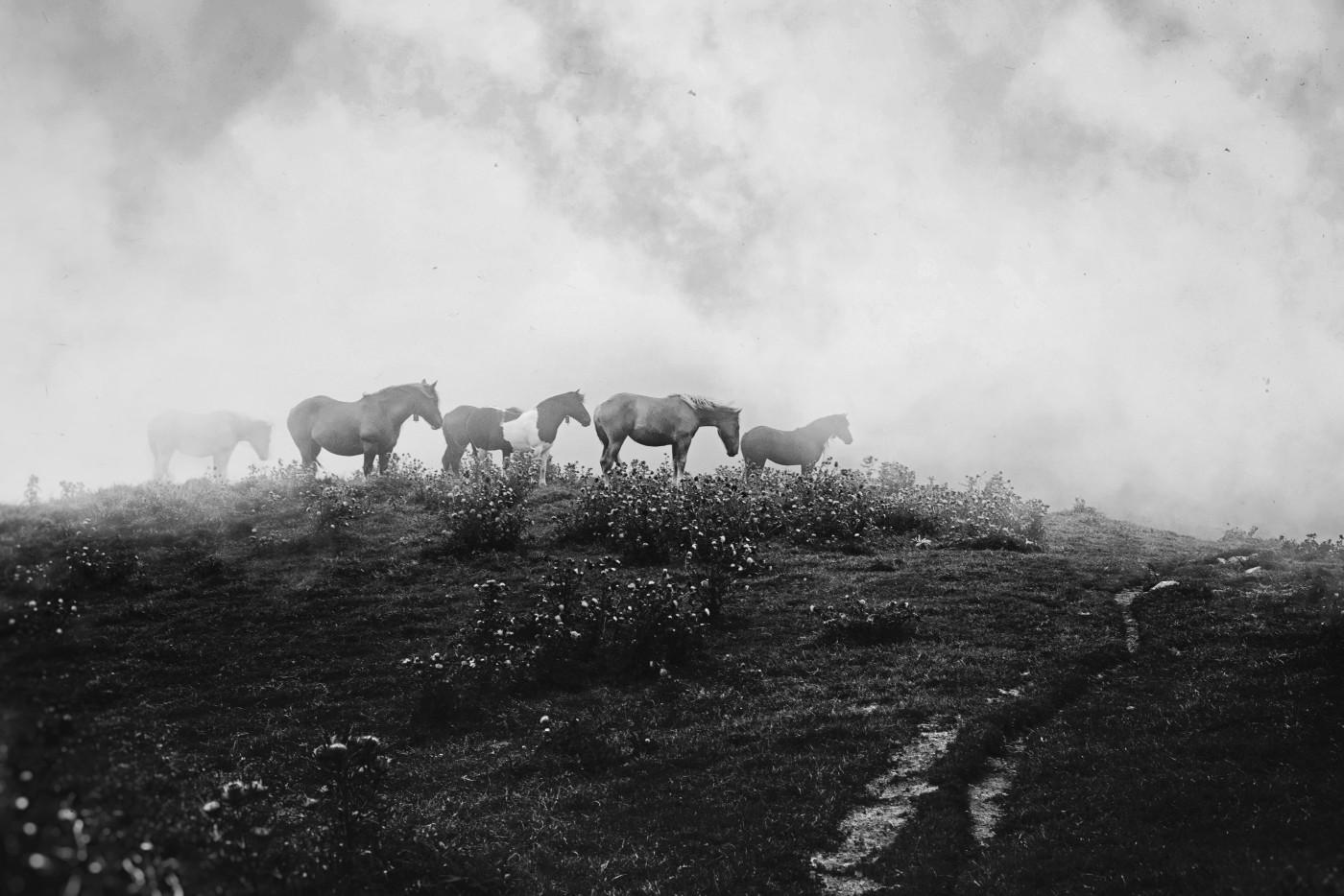 chevaux34